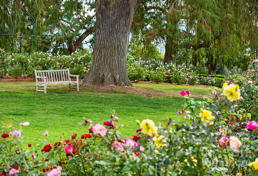 Take A Seat Beautiful Rose Garden Of The Huntington Library