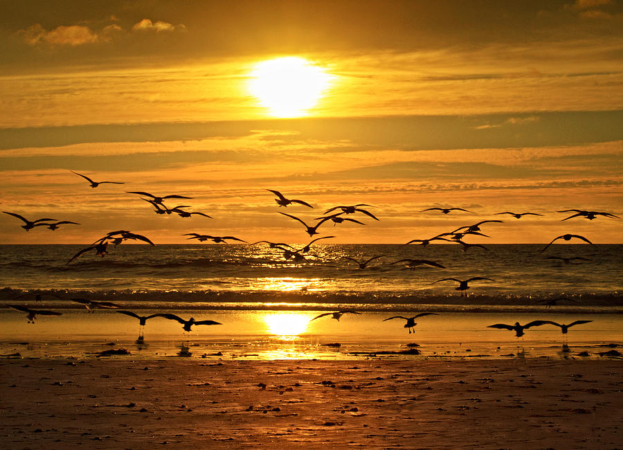 Seagulls Photograph - Take Flight At Sunset by Donna Pagakis