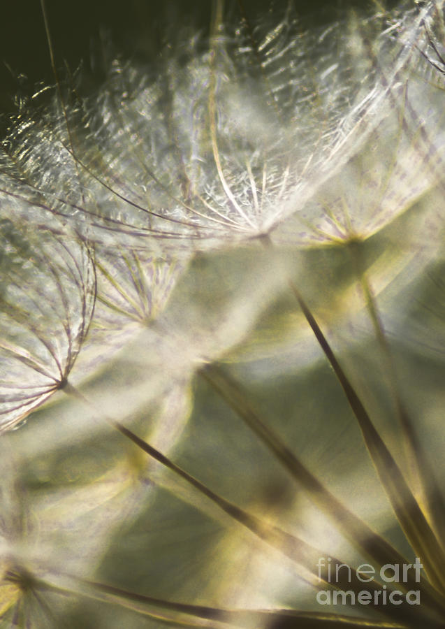 Dandelion Photograph - Take Me With You When You Go by Jan Bickerton