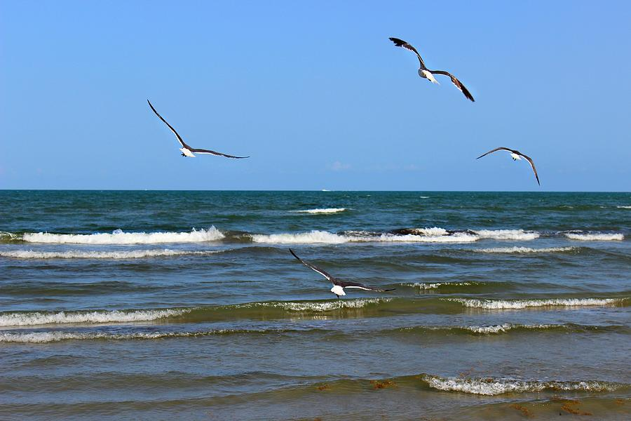 Birds Photograph - Take Off by Candice Trimble