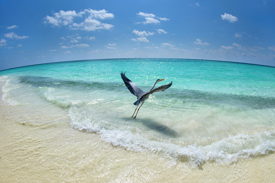 Bird Photograph - Take-off by Roberto Marchegiani