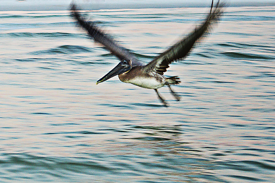Still Photograph - Take Off by Sherry Allen