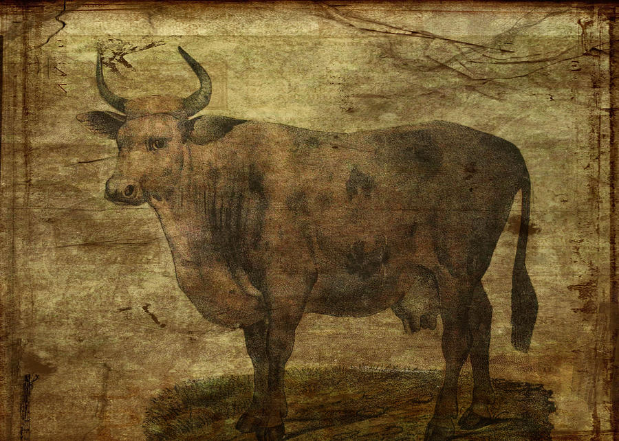 Cow Digital Art - Take The Cow By The Horns by Sarah Vernon