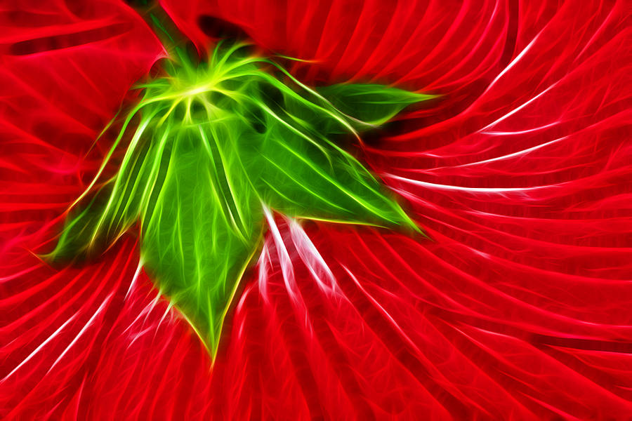 Hibiscus Photograph - Taken Back by Shane Bechler