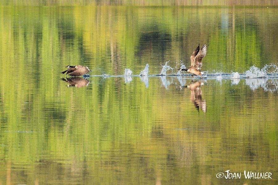 Morning Photograph - Takeoff by Joan Wallner