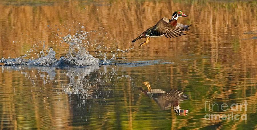 Takeoff Photograph by Wayne Bennett