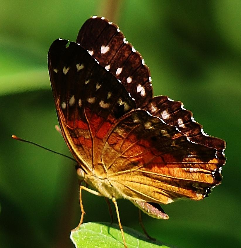 Insect Photograph - Taking A Break by Bruce Bley