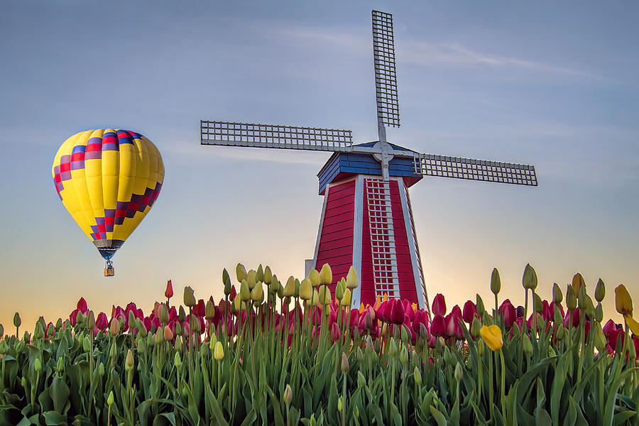 Wooden Shoe Photograph - Taking Off At Tulip Field by David Gn