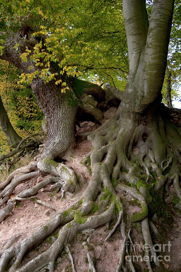 Nature Photograph - Taking Root by Heiko Koehrer-Wagner