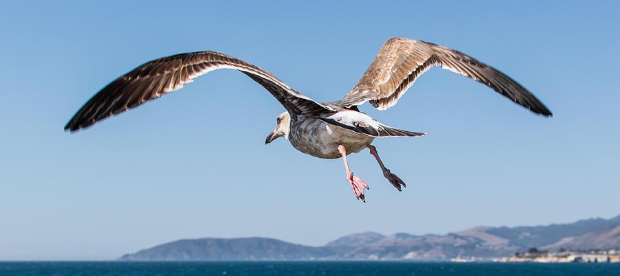 Bird Photograph - Taking To The Sky by Ian McMorran