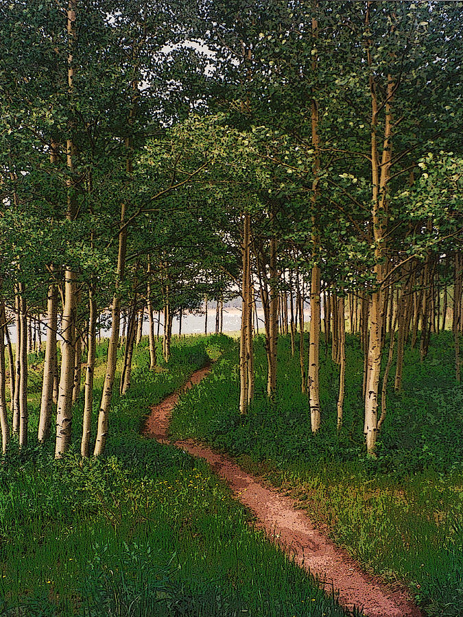 Pastoral Photograph - Taking Tthe Path Less Traveled by Carl Bandy