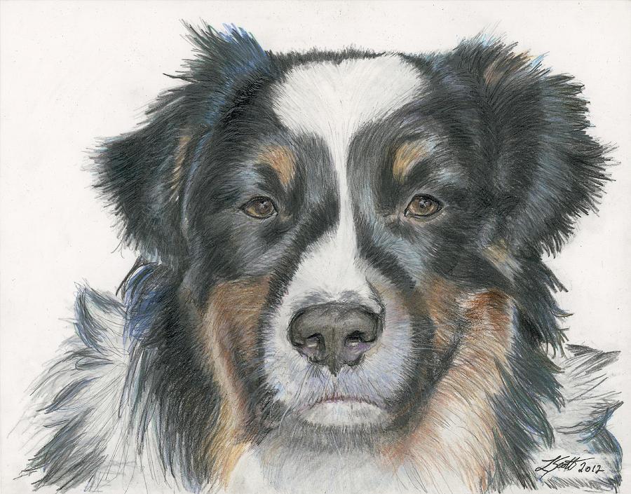 Dog Drawing - Takoda by Laurie Scott
