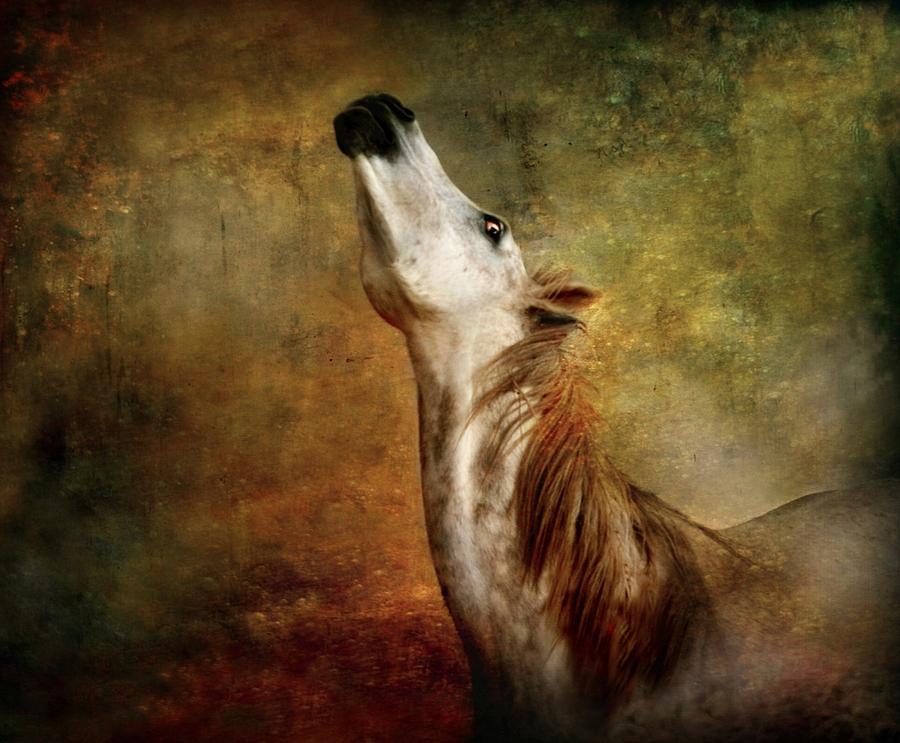 Horse Photograph - Talking To The Moon by Dorota Kudyba