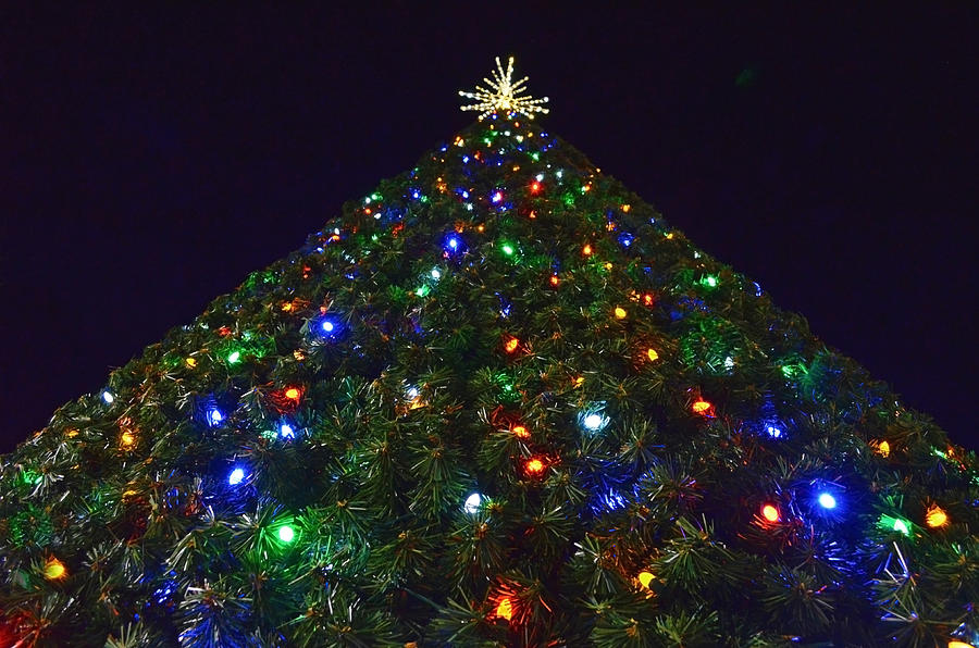 christmas tree photograph tall christmas tree perspective 2 by sandi oreilly - Tall Christmas Tree