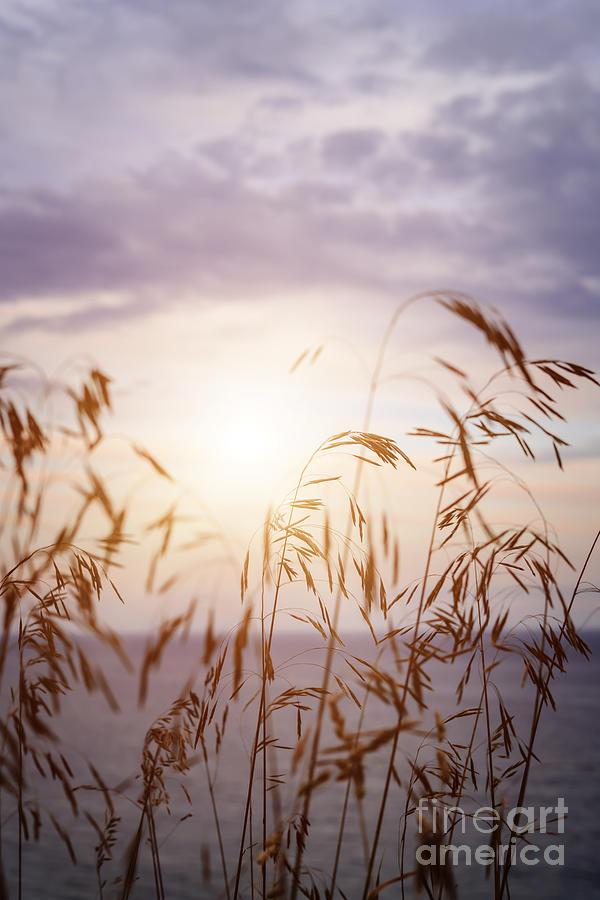 Grass Photograph - Tall Grass At Sunset by Elena Elisseeva