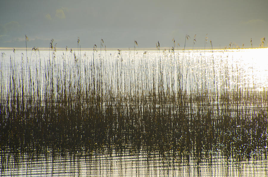 Tall Photograph - Tall Grass On Lough Eske - Donegal Ireland by Bill Cannon