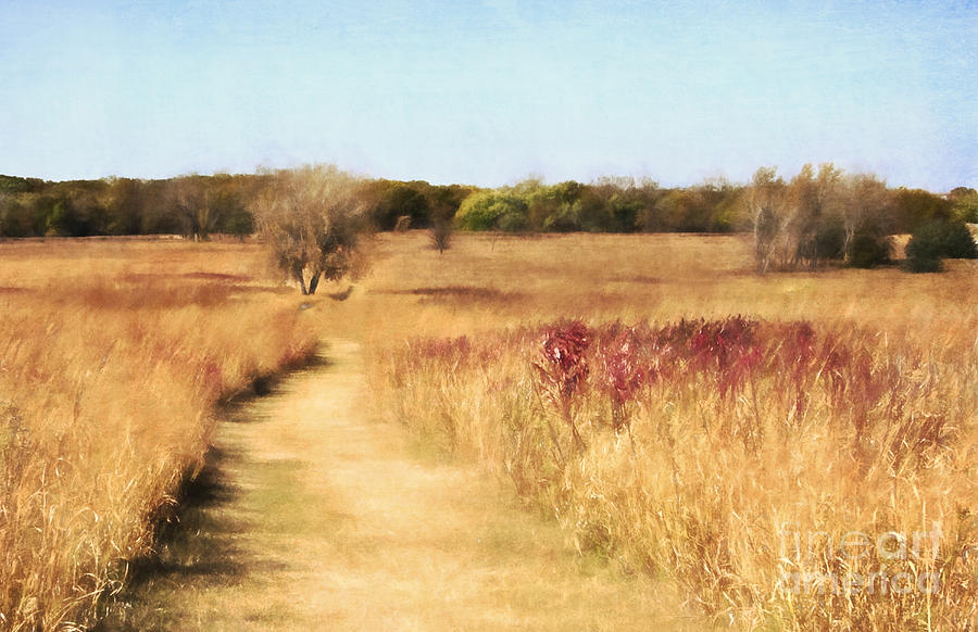 Tall Grass Prairie by Pam  Holdsworth