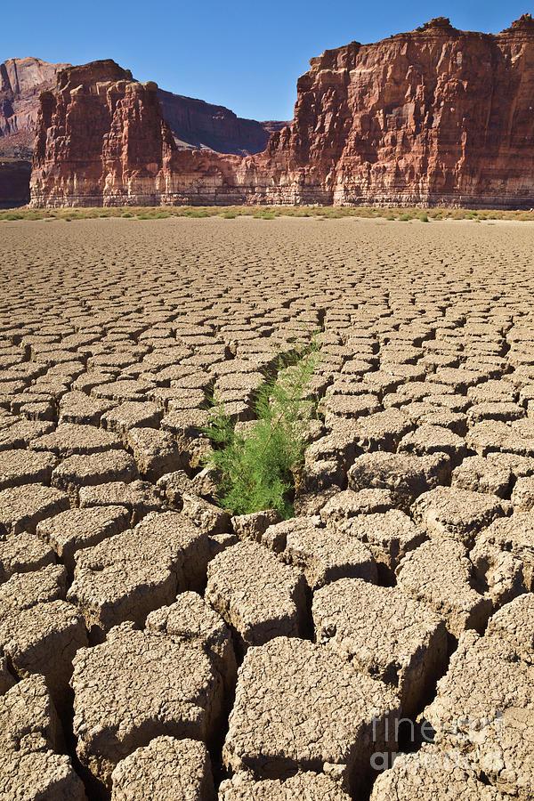 Tamarisk In Dry Colorado River Photograph by Yva Momatiuk John Eastcott