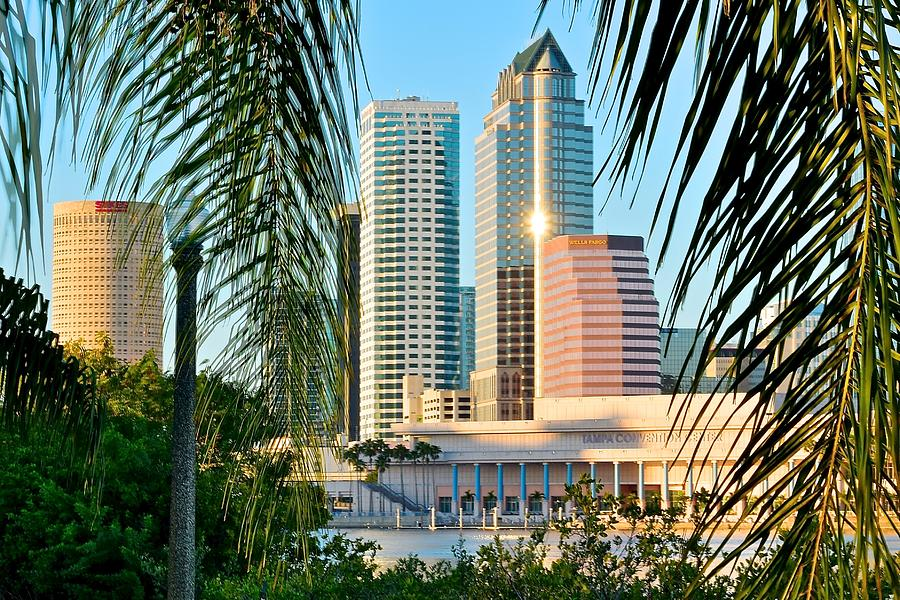Tampa Framed By Palms Photograph