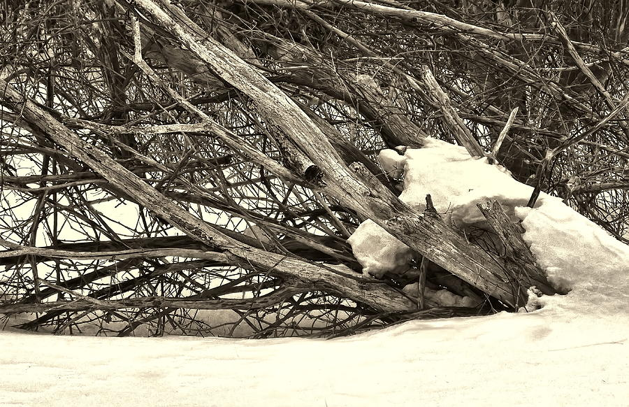Winter Photograph - Tangled by Alan Norsworthy