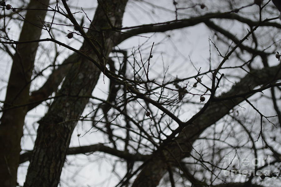 Tree Photograph - Tangled by Catherine Peterson
