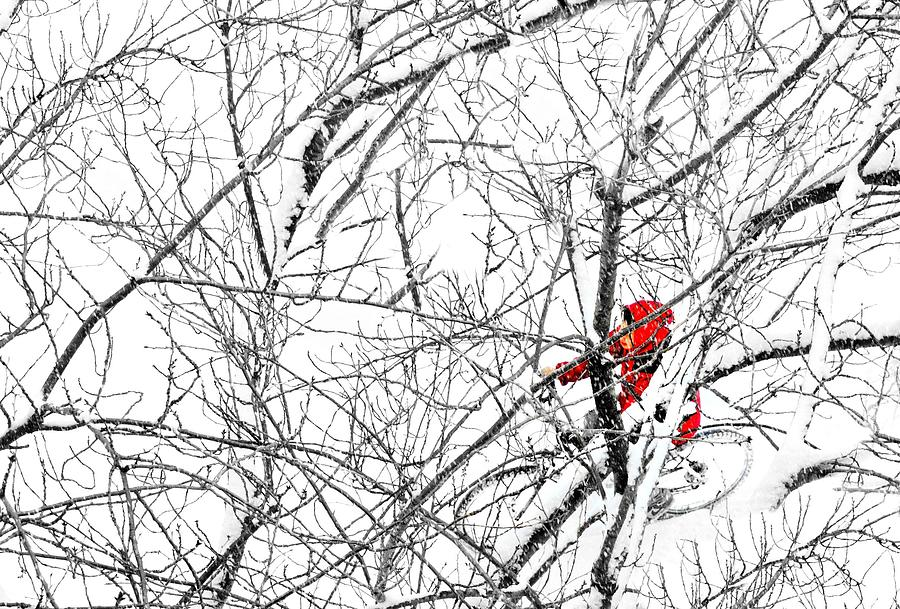 Snow Photograph - Tangled by Diana Angstadt