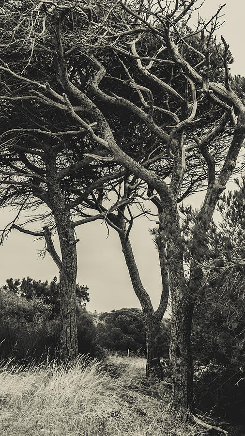 Nature Photograph - Tangled Trees by Marco Oliveira
