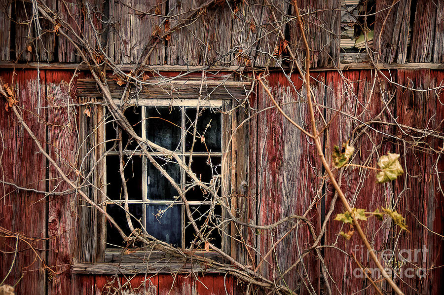 Barn Photograph - Tangled Up In Time by Lois Bryan