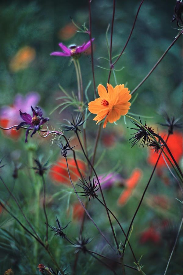 Tangle Photograph - Tangles - A Dance Of Flowers And Weeds by Michael Flood