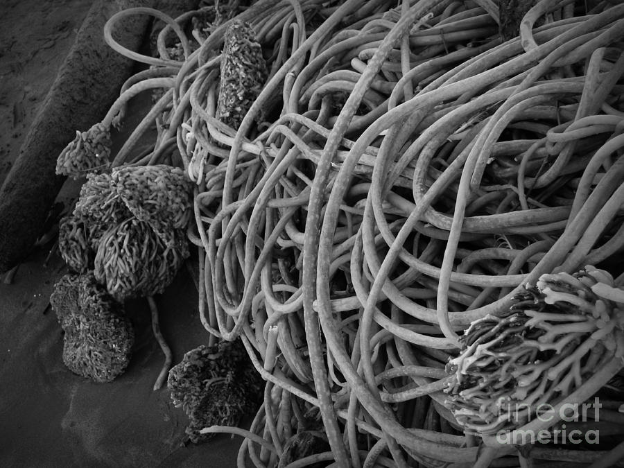 Seaweed Photograph - Tangles Of Seaweed 2 Bw by Chalet Roome-Rigdon