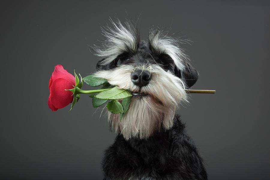 Dog Photograph - Tango Dancer by Adnan Mahmutovic