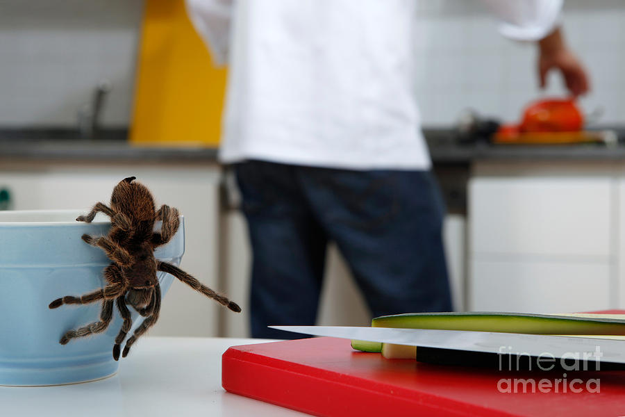 Chef Photograph - Tarantula Trying To Escape by Emilio Scoti