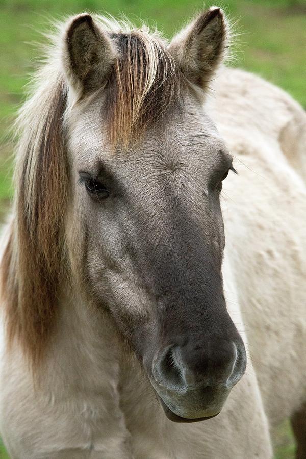Nobody Photograph - Tarpan Horse by Bob Gibbons