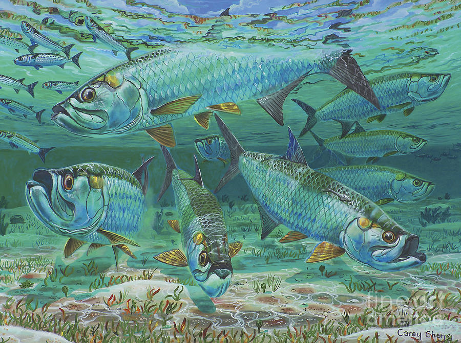 Tarpon Painting - Tarpon Rolling In0025 by Carey Chen