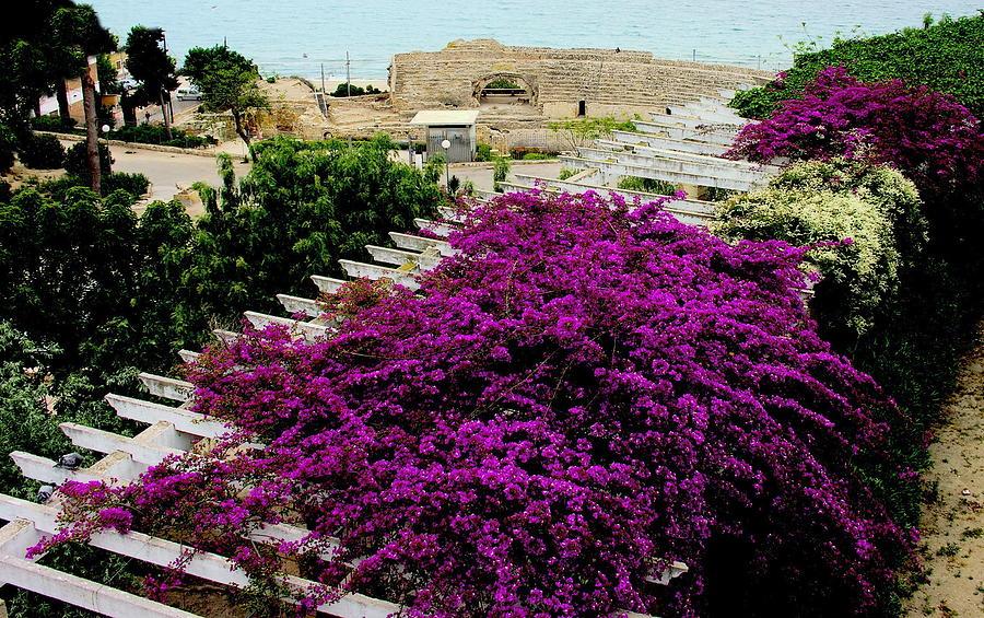 Flowers Photograph - Tarragona Roman Amphitheater by Jacqueline M Lewis