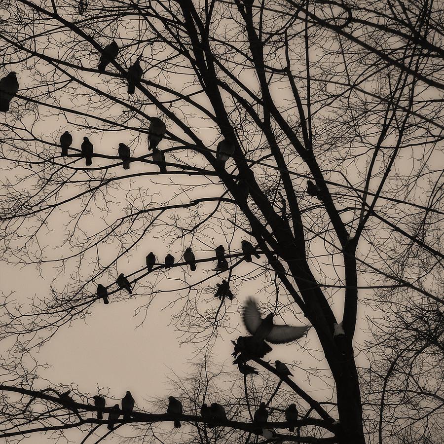 Surrealism Photograph - tathata #16NULLUS9 by Alex Zhul