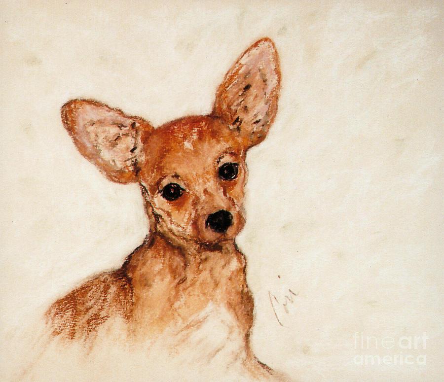 Chihuahua Drawing - Tavi by Cori Solomon