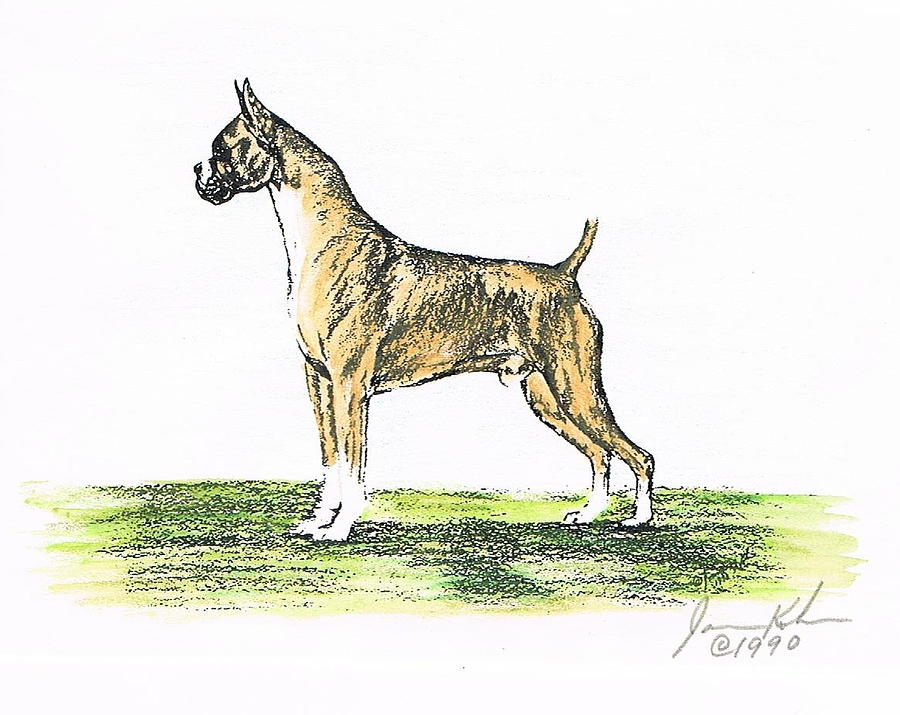 Boxer Mixed Media - Tawny Boxer by Joann Renner