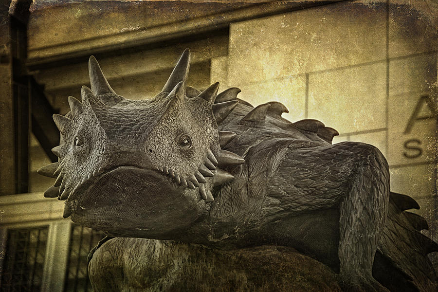 Tcu Horned Frog Photograph