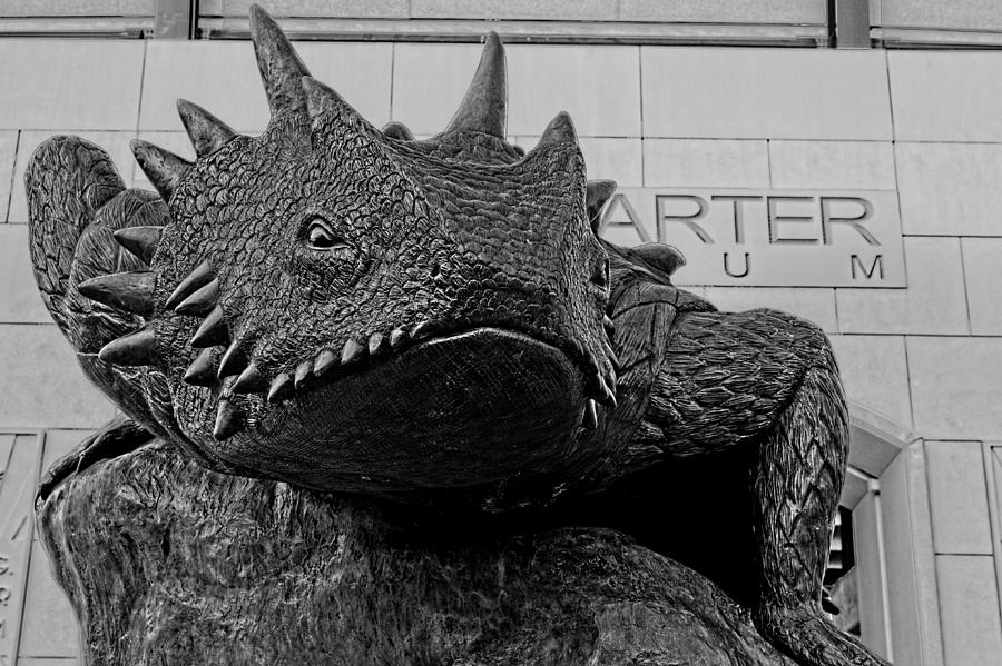Tcu Horned Frog Black And White Photograph