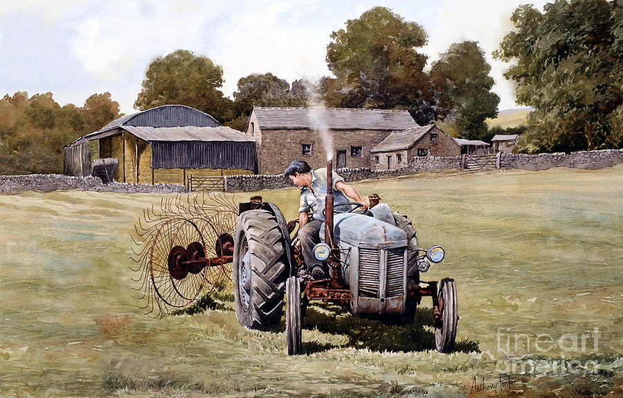 Little Grey Fergie Painting - Te20-fergy In The Fields by Anthony Forster