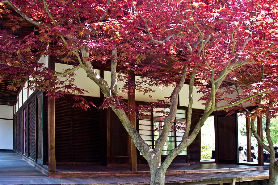 Shofuso Photograph - Tea House Thru The Maple by Tom Gari Gallery-Three-Photography