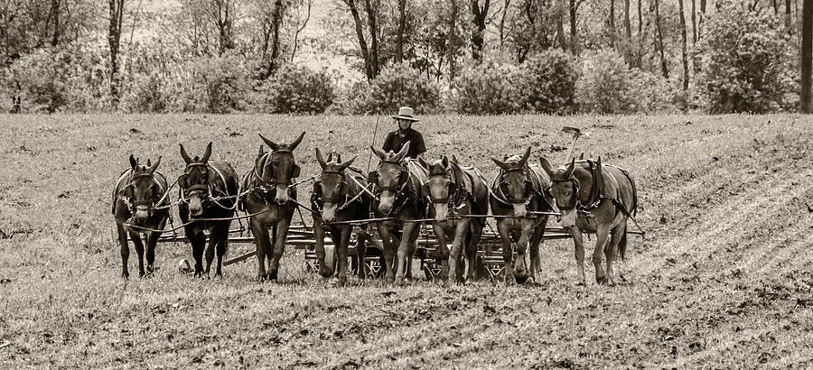 Agricultural Photograph - Team Of Eight by Guy Whiteley