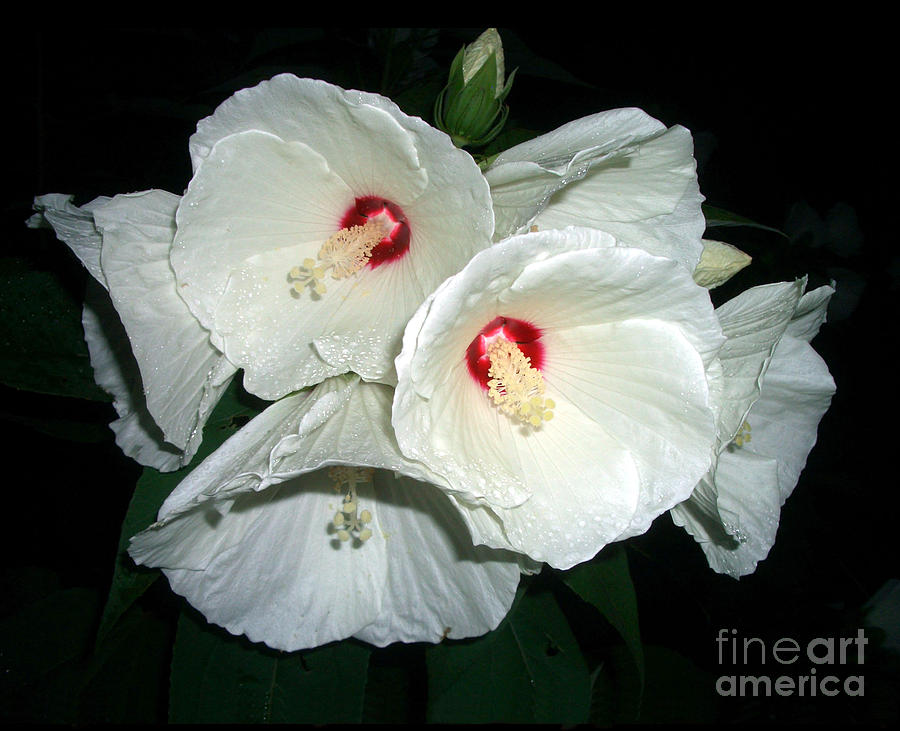 Flower Photograph - Teamwork by Jack Gannon