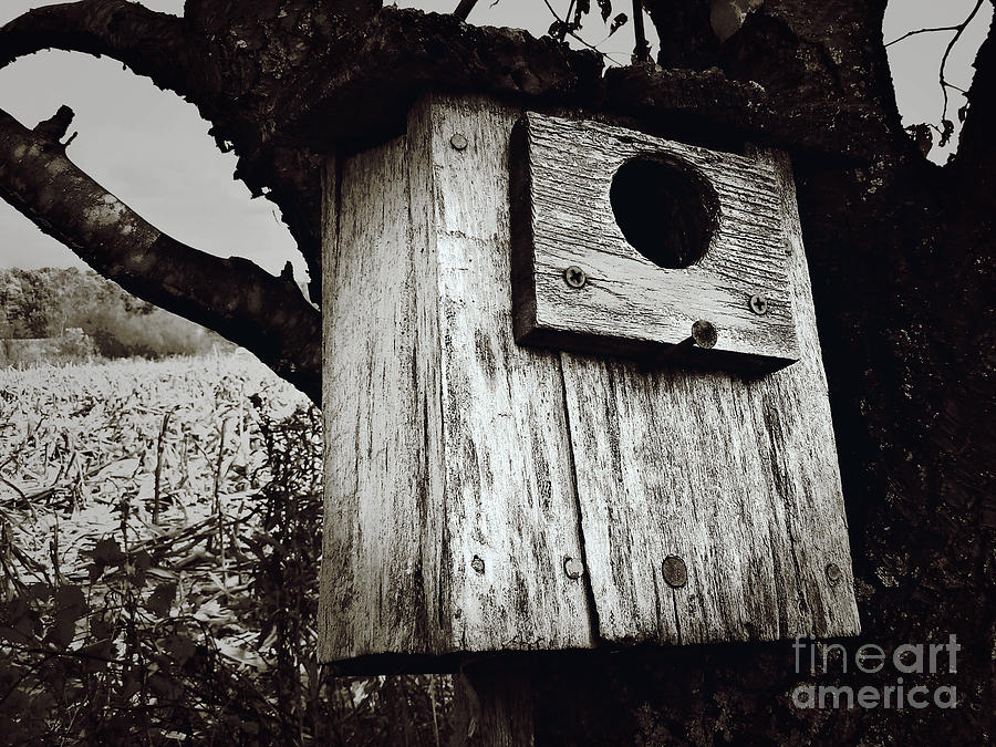 Birdhouse Photograph - Teapot Room With A View by Lin Haring