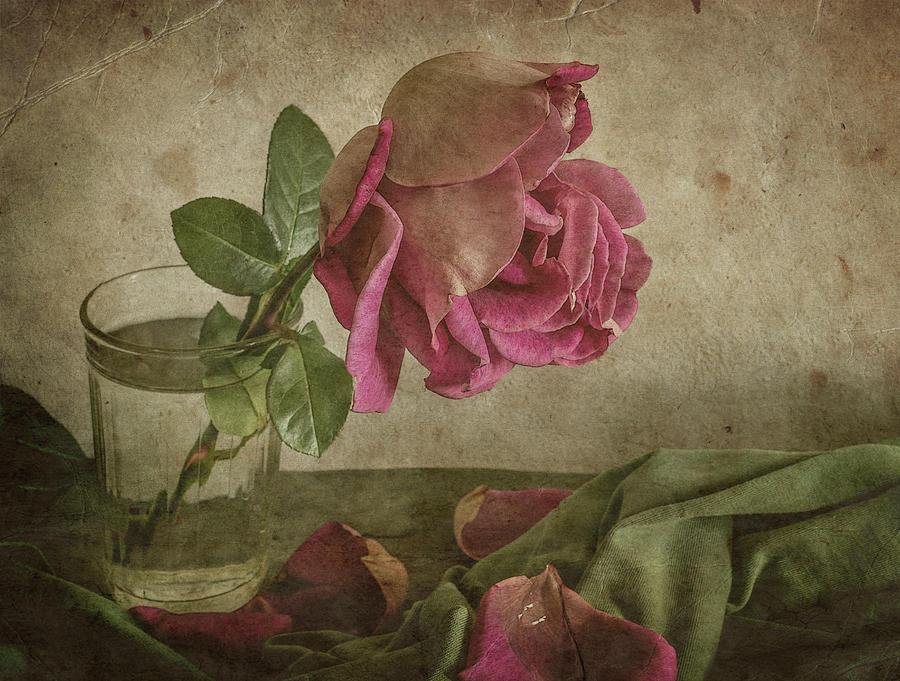 Rose Photograph - Tear Of Rose by Igor Tokarev