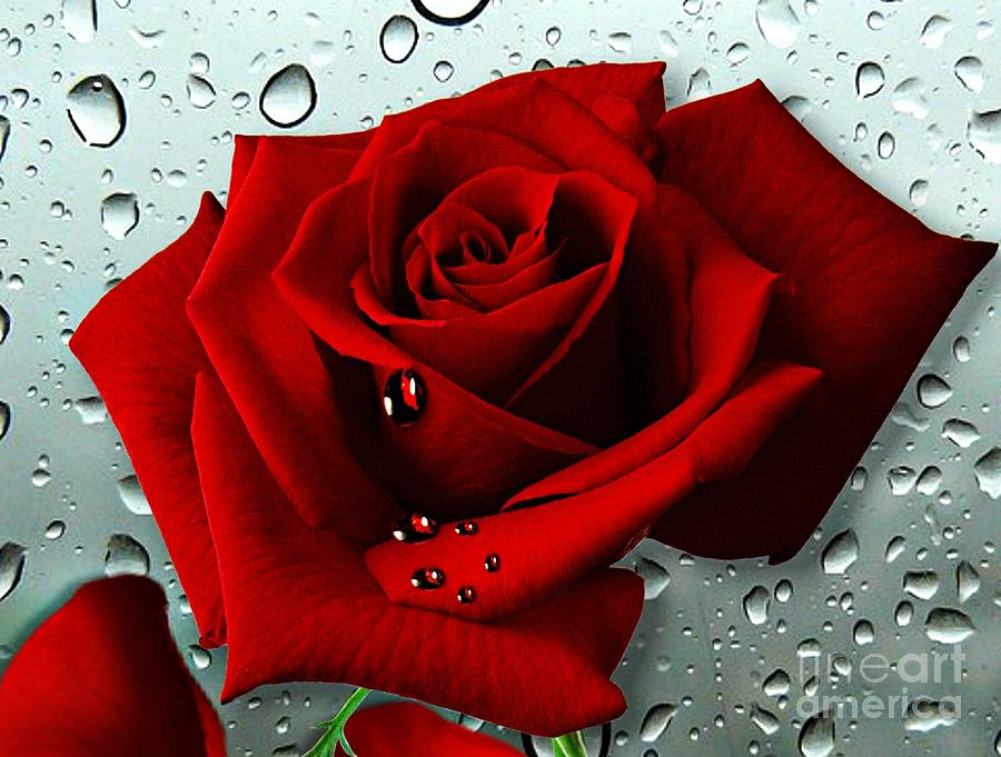 Red Rose Mixed Media - Tears From My Heart by Morag Bates