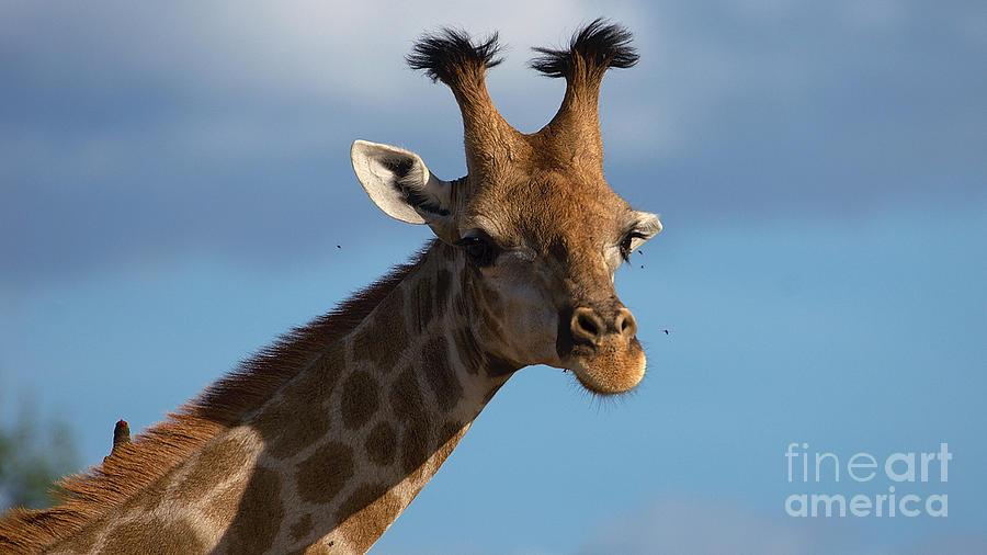 Teen giraffe with a style by Mareko Marciniak