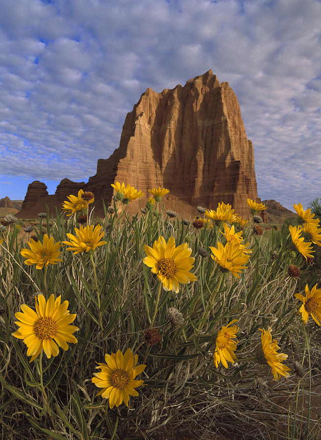 Temple Of The Sun With Sunflowers Photograph by Tim Fitzharris