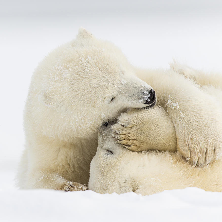 Anwr Photograph - Tender Embrace by Tim Grams